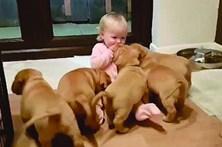 Cachorros 'atacam' bebé para tirar bolacha
