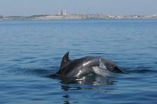 Estuário do Sado ganhou três golfinhos em 2017