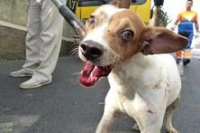 Retirados 50 cães de uma casa na Madeira