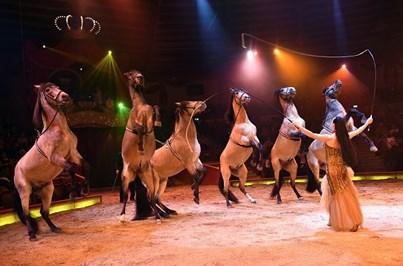 Proibição de utilização de animais nos circos vai ser debatida no parlamento