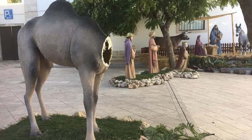 correio manha classificados pata de camelo