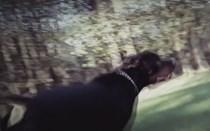 Multa de dois mil euros por ataque de cão