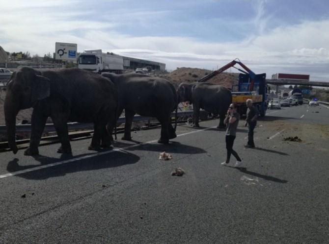 Elefantes cortam autoestrada em Albacete