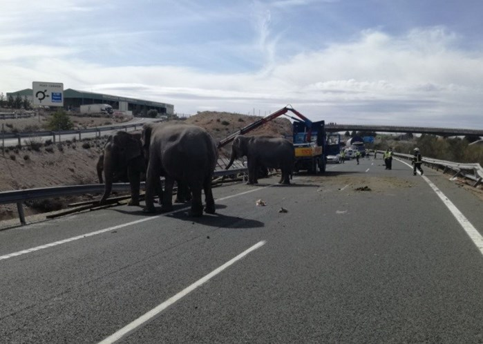 Espanha. Elefantes à solta em plena autoestrada