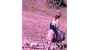 O triunfo dos porcos