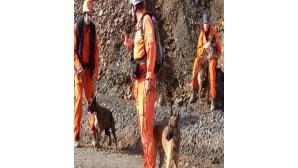 Cães ajudam bombeiros em buscas