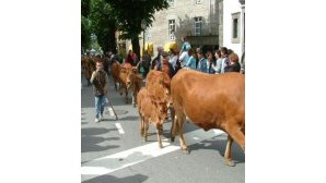 Vilar da Veiga leva gado à serra