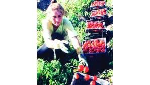 Milhões em fruta e saladas
