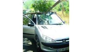 Árvore atinge carro na EN 9