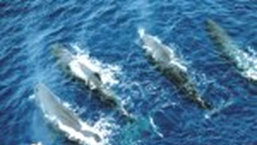 Em exercício militar anterior morreram 14 baleias