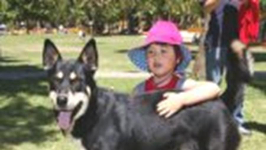 Privar as crianças do contacto com animais é um dos muitos erros