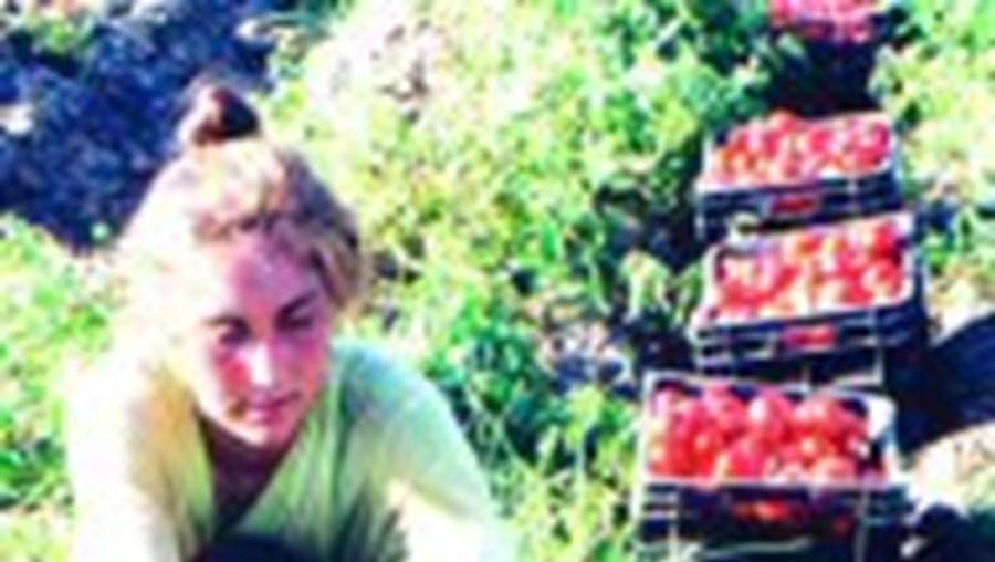 Dois mil trabalhadores têm emprego no sector horto-frutícola