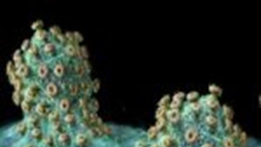Vírus engana o sistema imunitário