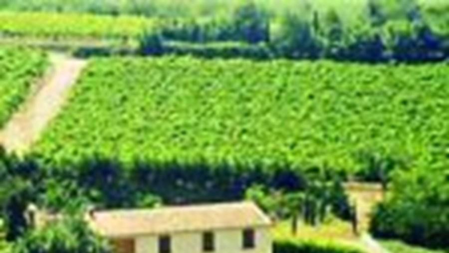 Produtores de vinho exigem o aumento dos preços