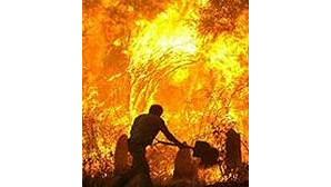 119 incêndios em Junho