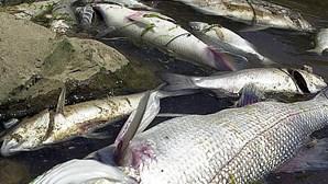 """Peixes mortos em """"quantidade significativa"""" em praias de Alcochete"""