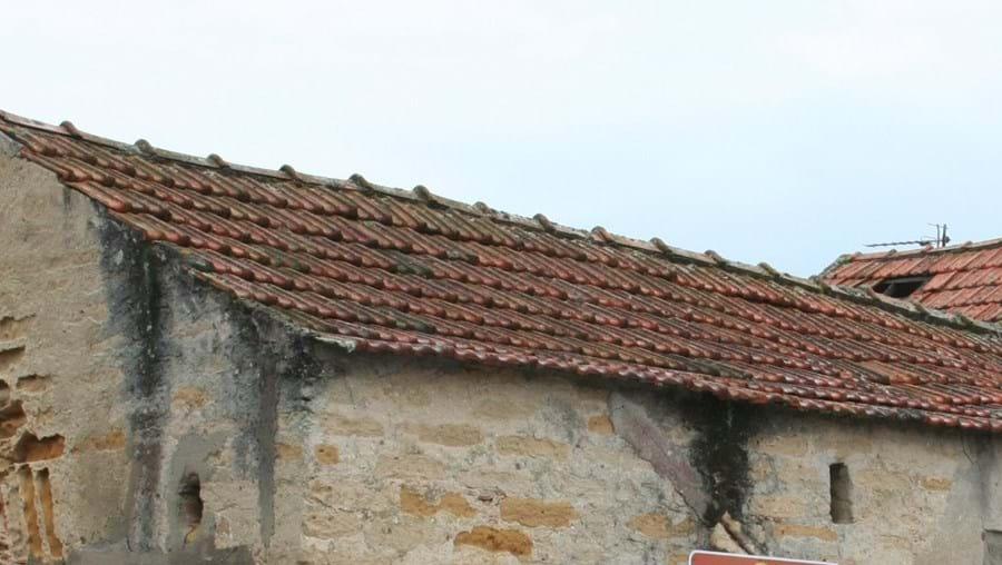 Educação ambiental na Murtosa