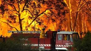 Austrália: Incêndios fazem mais de 200 mortos