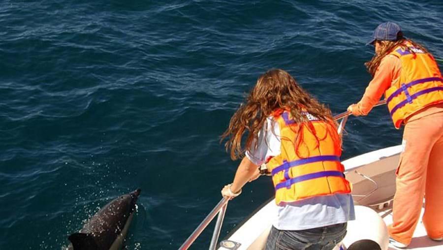 Ver golfinhos na Nazaré