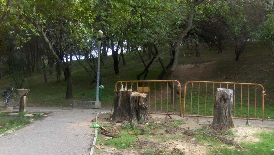 Árvores cortadas em Lisboa