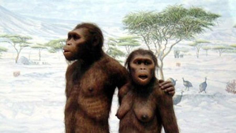 Os antepassados humanos já usavam o bipedismo quando passaram das árvores para terra firme