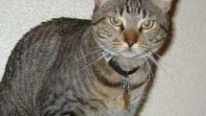 200€ por matar gato do vizinho