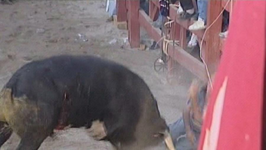 José Feijão, 65 anos, foi surpreendido, junto às tábuas, pela fúria do touro