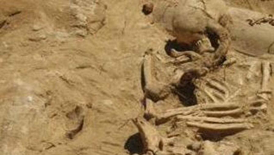Nove valas com 38 corpos em decomposição há quinze dias