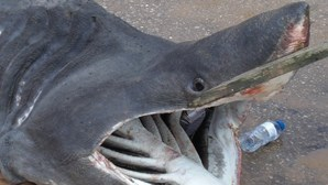Água quente atrai tubarões