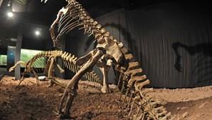 Ovos de crocodilo mais antigos do mundo descobertos na Lourinhã