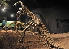 Dois esqueletos de Plateosaurus estão expostos no Museu Auberlehaus, em Trossingen, Alemanha. Estes dinossauros herbívoros viveram na Terra há 212 milhões de anos, mediam dez metros e pesavam quatro toneladas. Na zona, foram encontrados 60 fósseis de dinossauros.