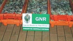 GNR apreende carrinha de polvo