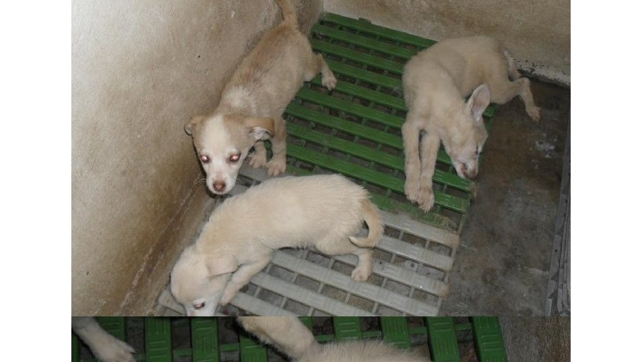 Cães no canil de Leiria