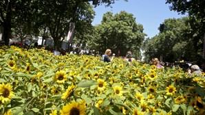 Alfacinhas enchem horta na avenida da Liberdade (COM VÍDEO)
