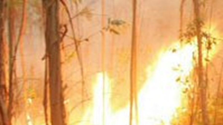 Incêndios: Três concelhos em risco muito elevado