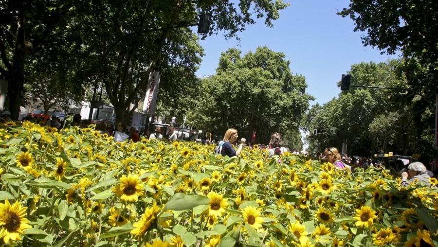 alfacinhas, lisboa, avenida da liberdade, hortas, produtos nacionais, tony carreira