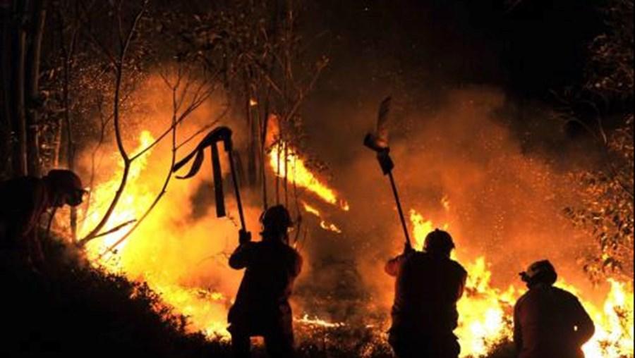 incêndios, fogos, projeto ' Self Prevention, 150 mil cabeças de gado caprino