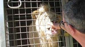 Portugueses têm leões, tigres ou crocodilos de estimação