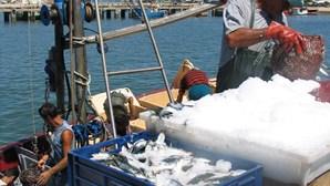 Frota da sardinha obrigada a parar