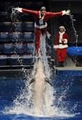 Espectáculo de golfinhos a propósito da época conquistou espectadores em Tóquio
