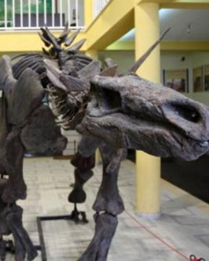 Concelho da Lourinhã tem patente vários esqueletos de dinossauros