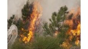 Fogos em Castro Daire e Penela dominados