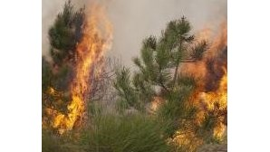 333 incêndios fazem de quarta-feira o dia com mais fogos em Março