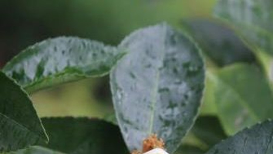Jardim Botânico da Covilhã terá cerca de cem espécies de flora da região