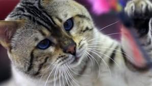 Infectadas com parasita dos gatos tentam suicidar-se mais