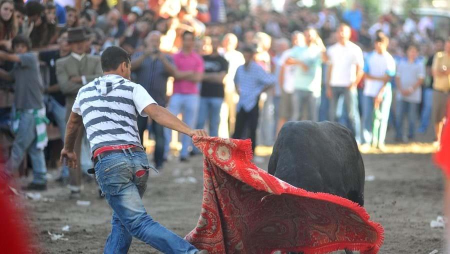 Cerca de mil pessoas, entre as quais campinos, cavaleiros e amazonas, percorreram ontem as ruas da cidade, no âmbito da 80.ª edição da 'Festa do Colete Encarnado'. (Rui Minderico)