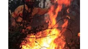 Protecção Civil registou 956 fogos na última semana