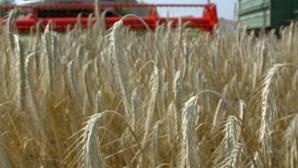 Produção de cereais será a mais baixa desde 2005