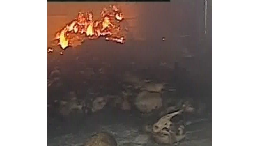 Animais morreram queimados