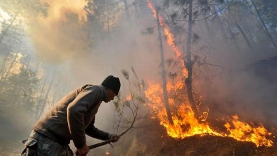 """Oito concelhos de Portugal continental estão esta segunda-feira em """"risco máximo"""" de incêndio"""